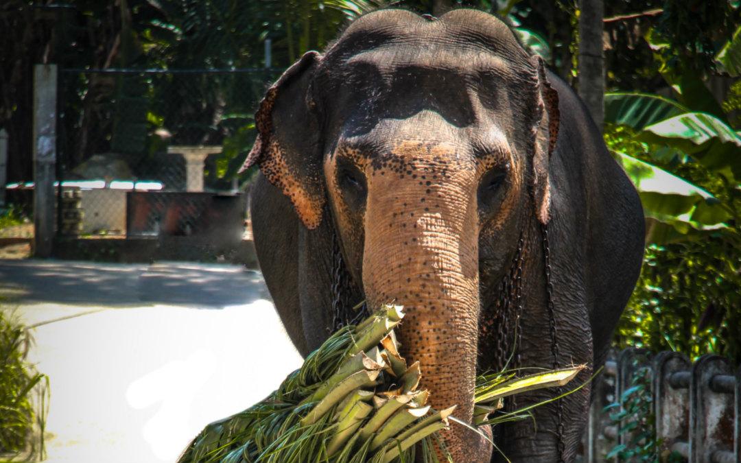 Šri Lanka: tura i odmor, 10 dana