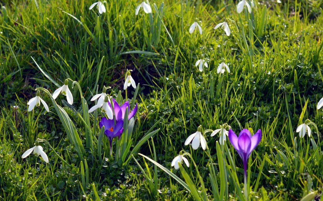 Proljeće u Trakošćanu za obitelj